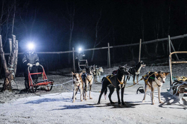 road trip en Norvège, photographe Norvège, photos de Norvège, Norvège en hiver, des loups en Norvège, voyager en Norvège